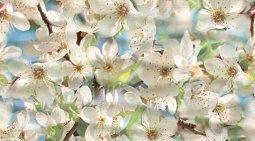 Декор Ceradim Spring Dec Spring Panno B 25x45